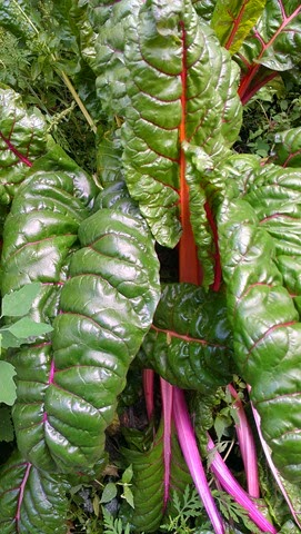 Super Fast Swiss Chard – A. Catherine Noon
